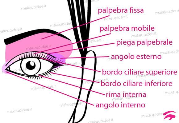 schema parti dell'occhio