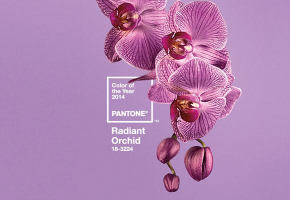 colore dell'anno 2014 Radiant Orchid